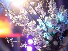 梦幻宫廷婚礼秀预告